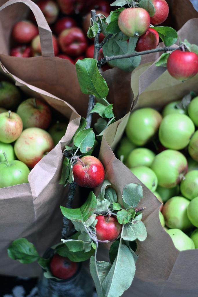 vispilänviemää_omenat
